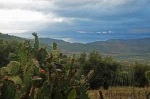 Kaktus & Gewitterwolken