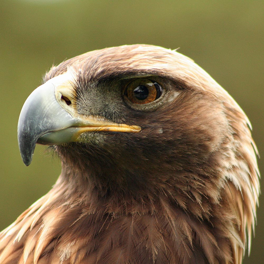 News Of Eaglet Fell From Nest At Pine Island Fl